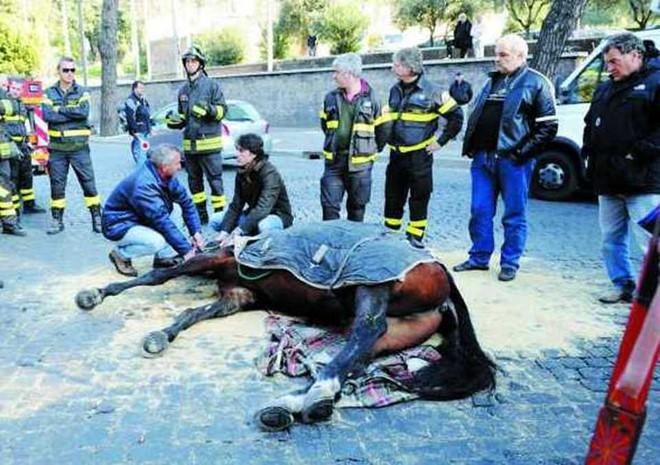 Kiến nghị cấm xe du lịch ở Rome sau khi ngựa ngã gục trên đường phố - Ảnh 3.