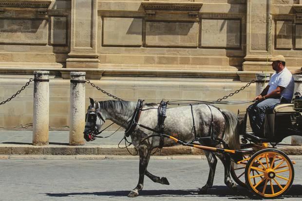 Kiến nghị cấm xe du lịch ở Rome sau khi ngựa ngã gục trên đường phố - Ảnh 4.