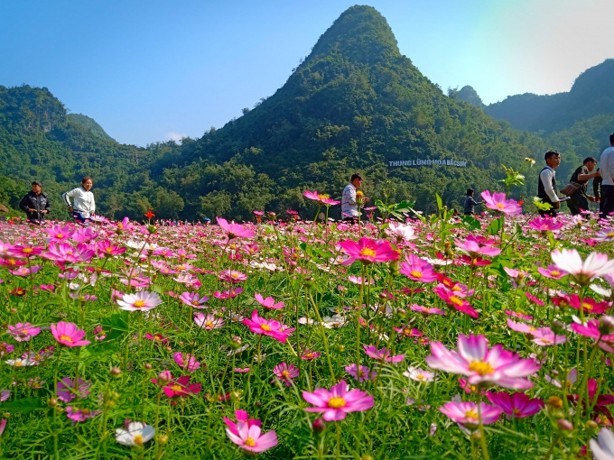 """Kết quả hình ảnh cho thung lũng hoa hồng ở đảo hải nam"""""""