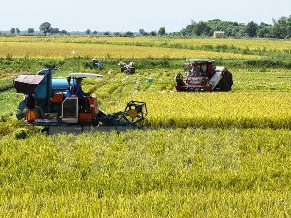 Năm 2019, xuất khẩu gạo sang thị trường lớn Trung Quốc sẽ gặp rất nhiều thách thức - Ảnh 1.