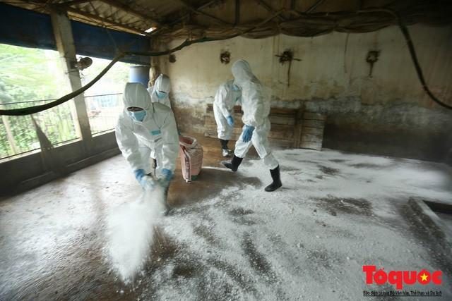Người đứng đầu các địa phương sẽ phải chịu trách nhiệm về kết quả phòng, chống bệnh dịch tả lợn Châu Phi tại nơi mình quản lý - Ảnh 1.