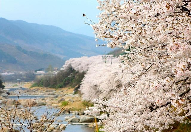 Tháng ba đến Hàn Quốc ngắm hoa anh đào - Ảnh 7.