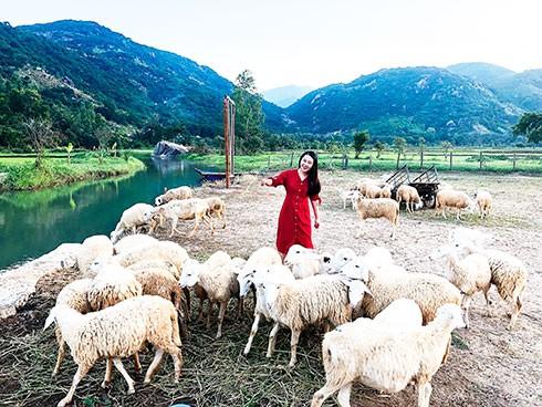 Check-in đồng cừu, điểm du lịch hot của các bạn trẻ hiện nay - Ảnh 1.