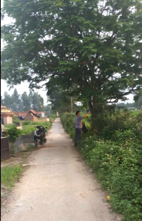 Bắc Ninh nhanh chóng dọn dẹp cây kim tiêm sau phản ánh của Báo điện tử Tổ Quốc - Ảnh 2.
