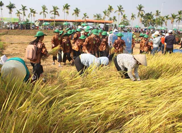 Tôn vinh nghề trồng lúa nước qua Lễ hội ngày mùa năm 2019 - Ảnh 1.