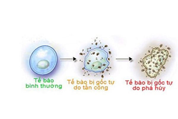 Bạn có biết khối u bướu hình thành qua những bước nào? - Ảnh 2.