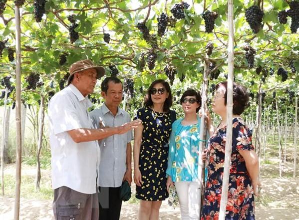 Lượng khách đến Ninh Thuận dịp nghỉ lễ tăng gấp 3 lần năm 2018 - Ảnh 1.