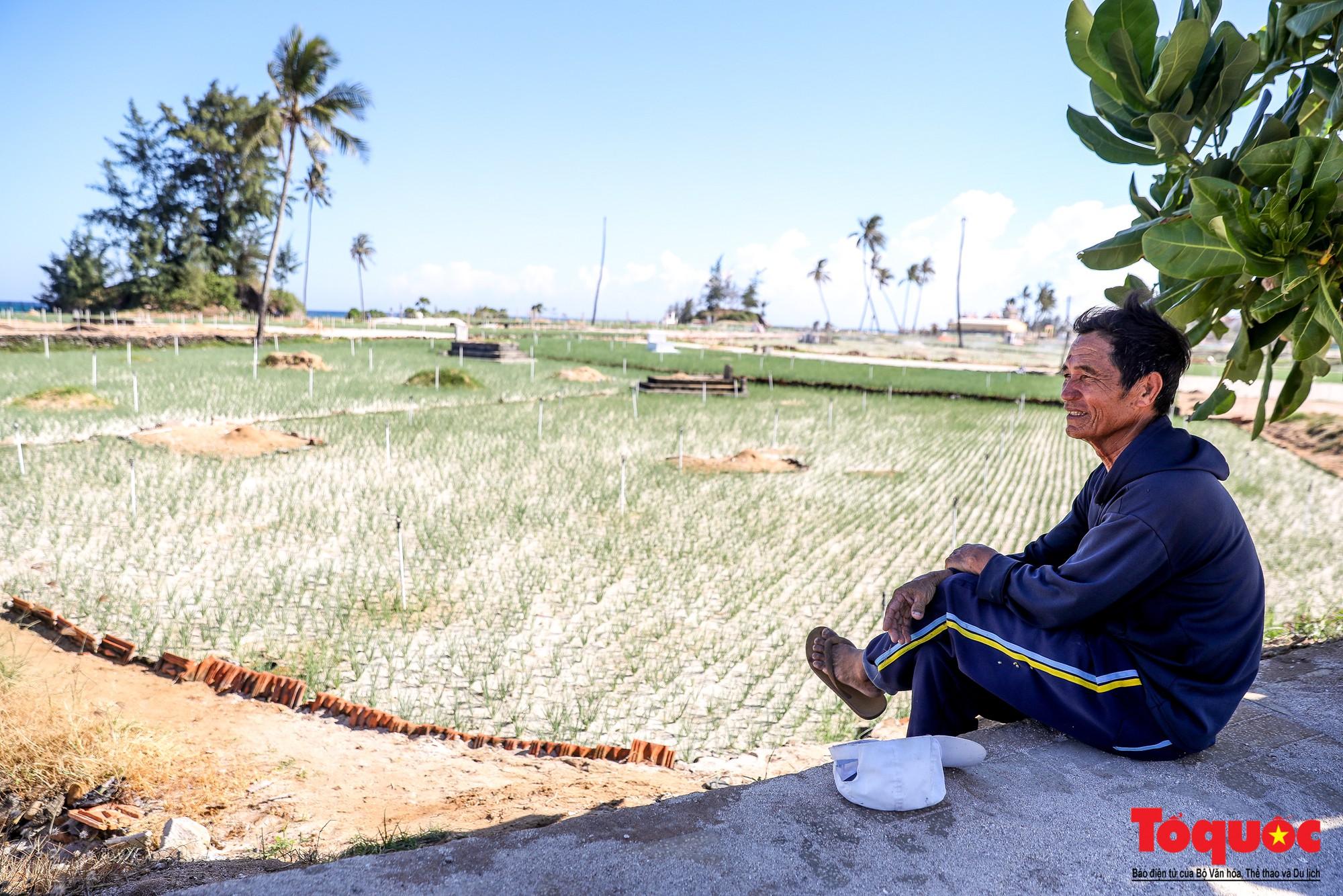 Hành tím Lý Sơn vào mùa thu hoạch: Nông dân phấn khởi vì giá tăng gấp đôi năm ngoái  - Ảnh 13.