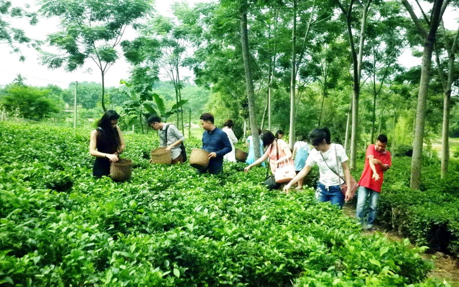Khai thác tiềm năng du lịch nông nghiệp tại Hậu Giang