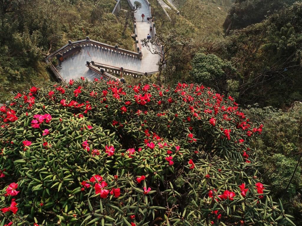 """""""Thêu hoa"""" lên đỉnh trời Hoàng Liên Sơn - Ảnh 4."""