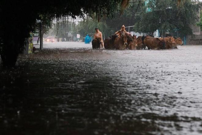 Người dân Phú Quốc vật lộn trong trận đại hồng thủy lịch sử - Ảnh 1.