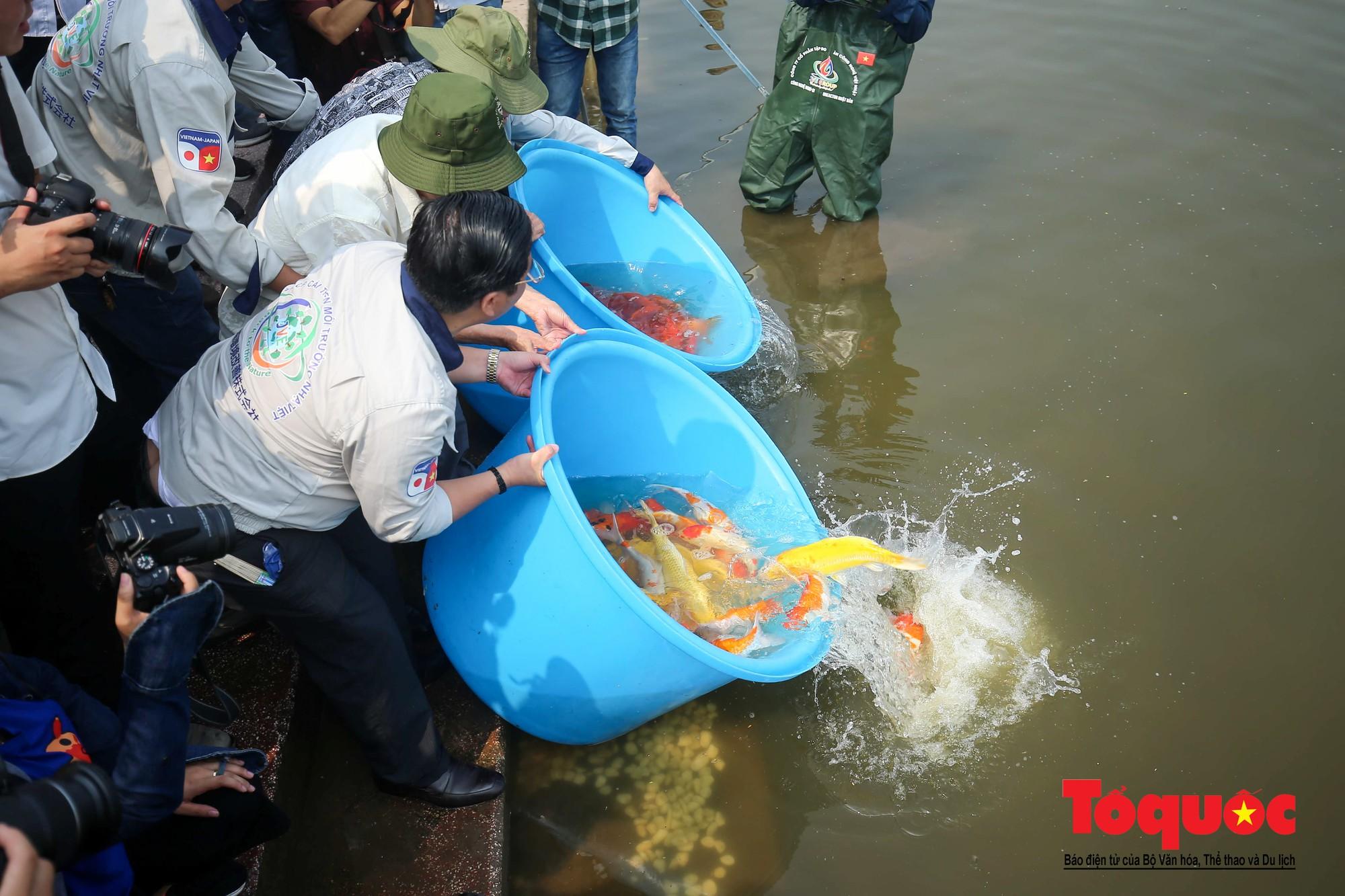 Hà Nội Thả thử nghiệm gần 100 con cá Koi Nhật Bản xuống sông tô lịch và Hồ Tây (11)