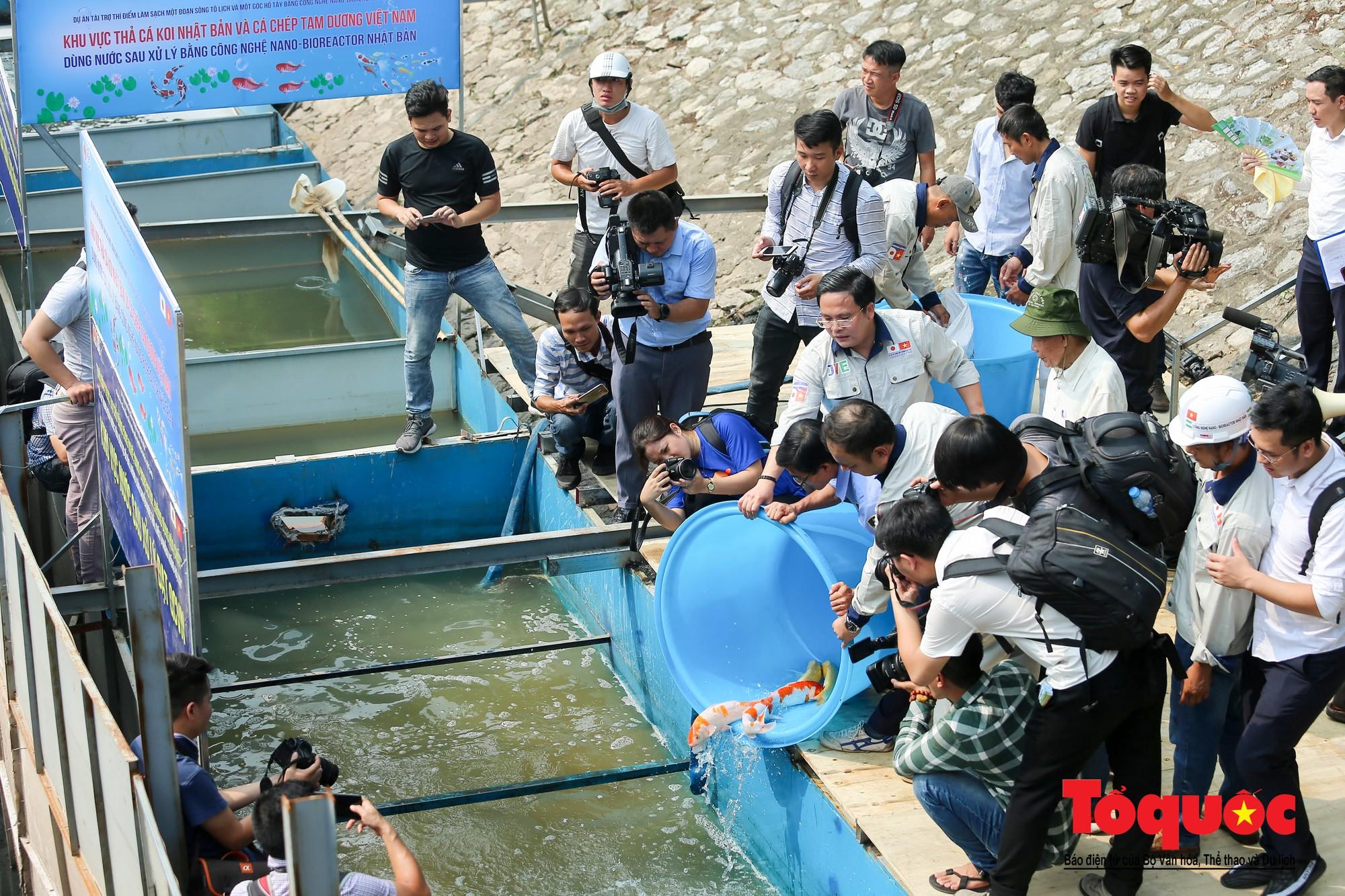 Hà Nội Thả thử nghiệm gần 100 con cá Koi Nhật Bản xuống sông tô lịch và Hồ Tây (6)