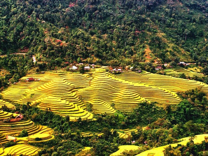 Ngỡ ngàng vẻ đẹp ruộng bậc thang Hoàng Su Phì mùa lúa chín - Ảnh 3.