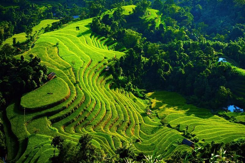 Ngỡ ngàng vẻ đẹp ruộng bậc thang Hoàng Su Phì mùa lúa chín - Ảnh 4.