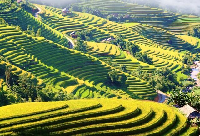 Ngỡ ngàng vẻ đẹp ruộng bậc thang Hoàng Su Phì mùa lúa chín - Ảnh 5.