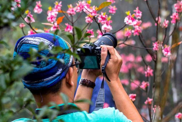 Chiêm ngưỡng hoa đào chuông độc đáo trên đỉnh Bà Nà - Ảnh 5.