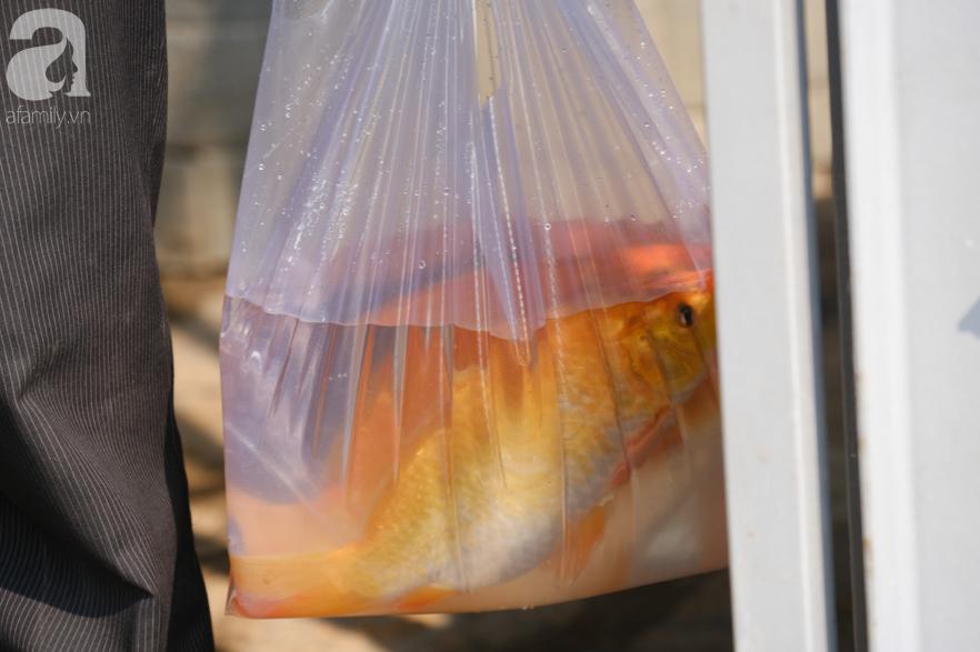 """Người Sài Gòn thả hàng trăm ký cá ngày 23 tháng Chạp: Ông Táo """"chưa kịp cưỡi về trời"""" thì cá đã bị chích điện - Ảnh 4."""