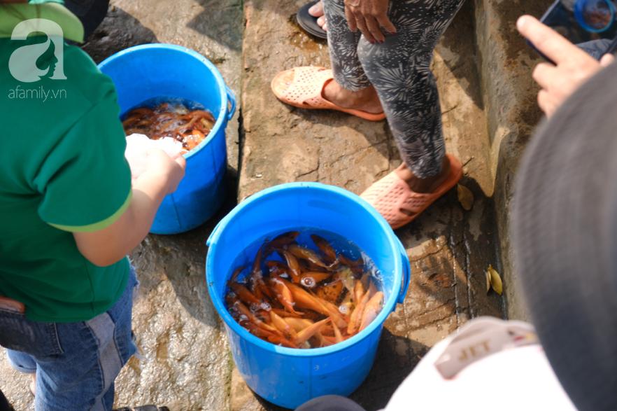 """Người Sài Gòn thả hàng trăm ký cá ngày 23 tháng Chạp: Ông Táo """"chưa kịp cưỡi về trời"""" thì cá đã bị chích điện - Ảnh 3."""