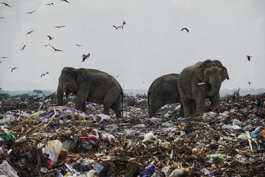 7 ngày qua ảnh: Voi hoang dã kiếm ăn tại bãi rác vì cạn đất sống - Ảnh 6.