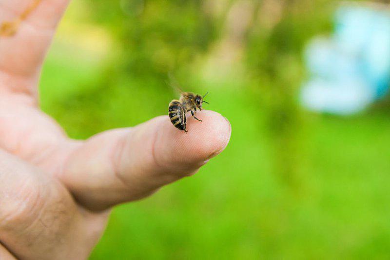 Trưởng thôn 23 tuổi bị ong đốt tử vong trong vườn - Ảnh 1.