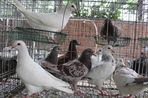 Du học về Việt Nam nhưng lương quá thấp, chàng trai nghỉ việc đi nuôi chim, doanh thu 15 tỷ/năm - Ảnh 1.