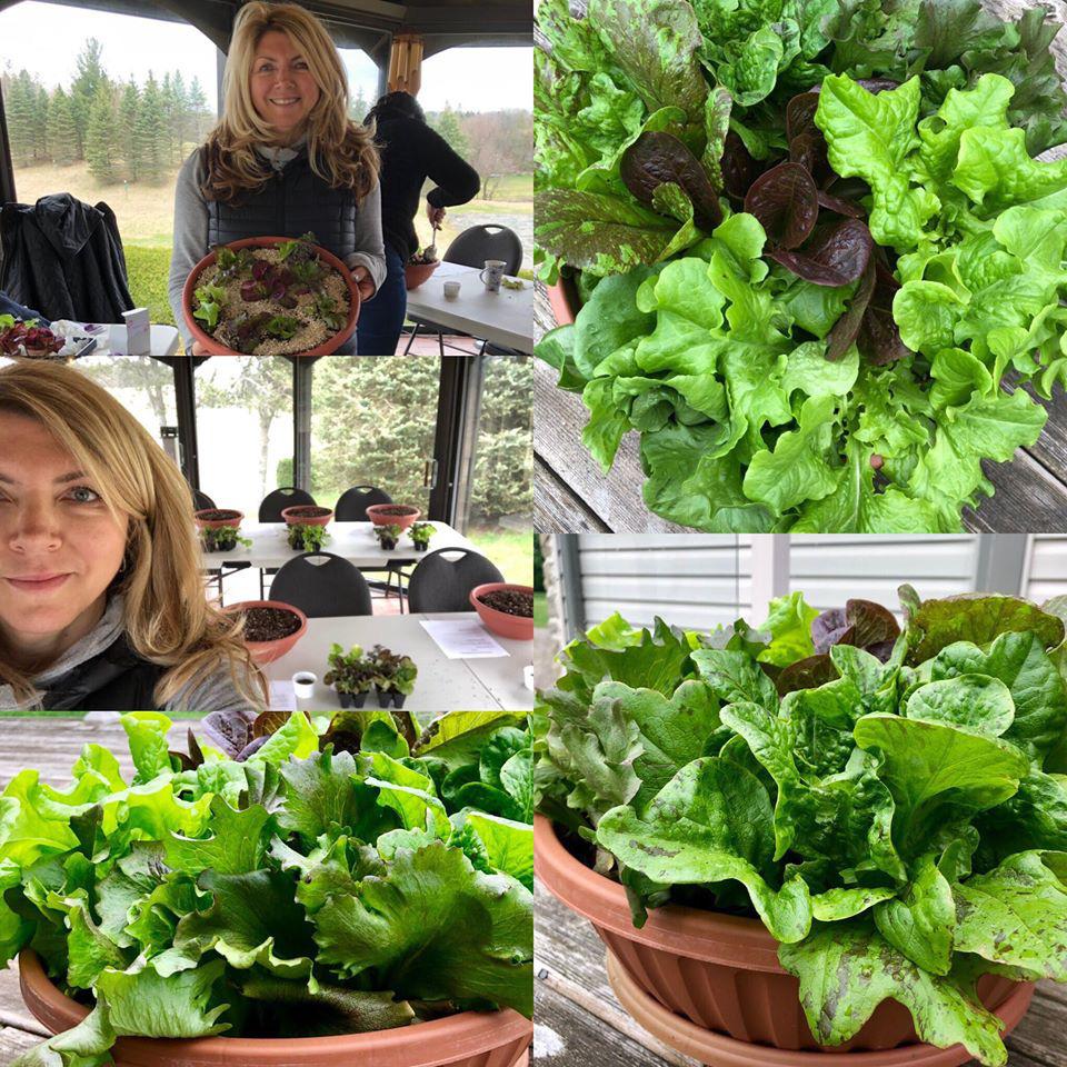 Bà mẹ trẻ từ chối công việc thành thị để về quê trồng cả vườn rau đẹp như tranh vẽ - Ảnh 18.