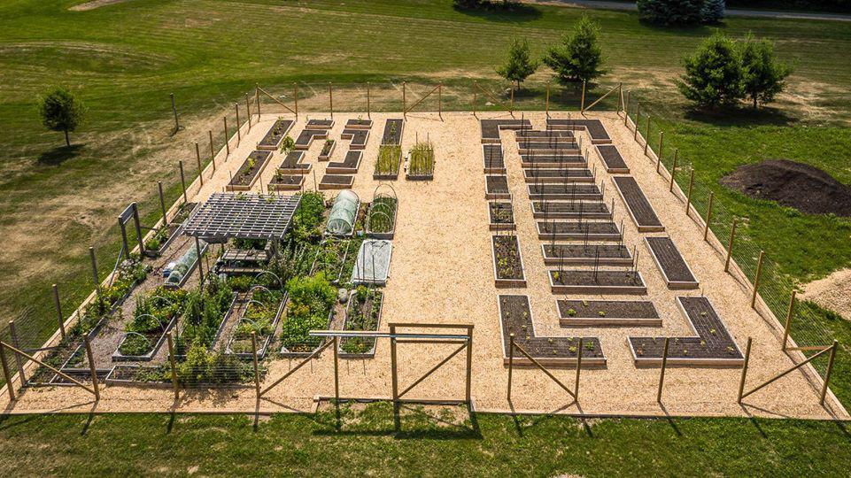 Bà mẹ trẻ từ chối công việc thành thị để về quê trồng cả vườn rau đẹp như tranh vẽ - Ảnh 2.