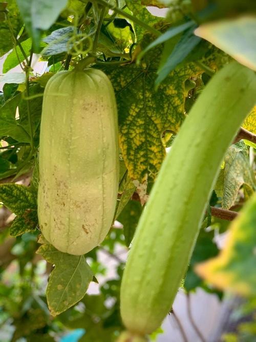 """Thích thú với khu vườn toàn """"hoa quả nhập ngoại"""" của ca sĩ Mỹ Lệ - Ảnh 9."""