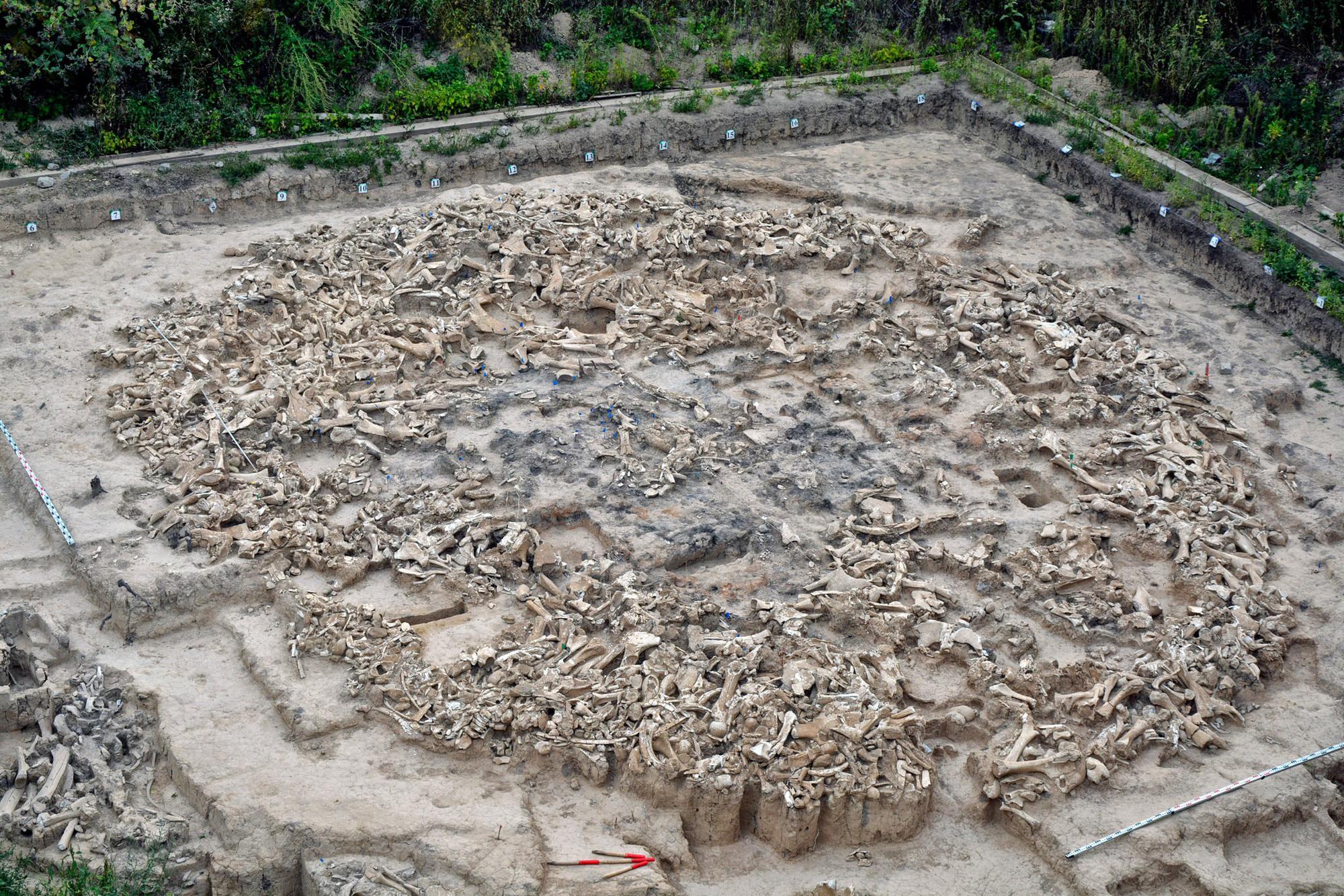 Kiến trúc cổ 20.000 năm tuổi được xây bằng xương voi ma mút làm choáng váng các nhà khoa học - Ảnh 1.