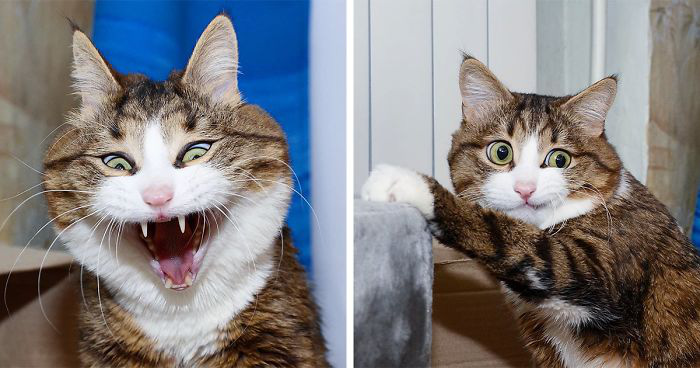 Hóa ra mèo cũng có biểu cảm khuôn mặt, nhưng không phải ai trong chúng ta cũng có thể nhận ra - Ảnh 1.