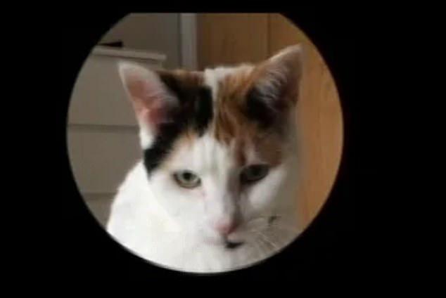 Hóa ra mèo cũng có biểu cảm khuôn mặt, nhưng không phải ai trong chúng ta cũng có thể nhận ra - Ảnh 2.