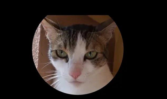 Hóa ra mèo cũng có biểu cảm khuôn mặt, nhưng không phải ai trong chúng ta cũng có thể nhận ra - Ảnh 5.