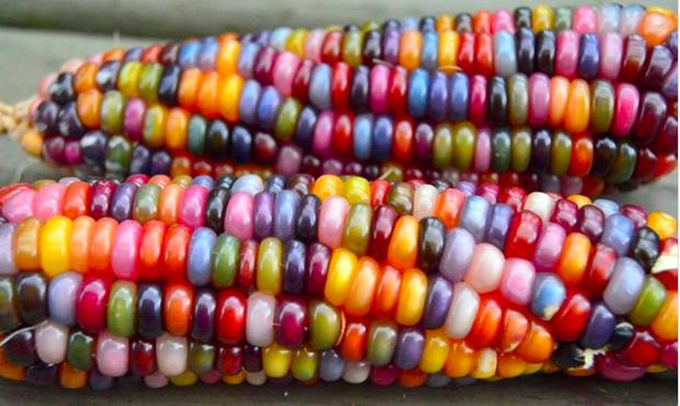 Những loại rau củ kỳ lạ nhất thế giới: Ngô 7 màu, xúp lơ trông như xương rồng - Ảnh 1.
