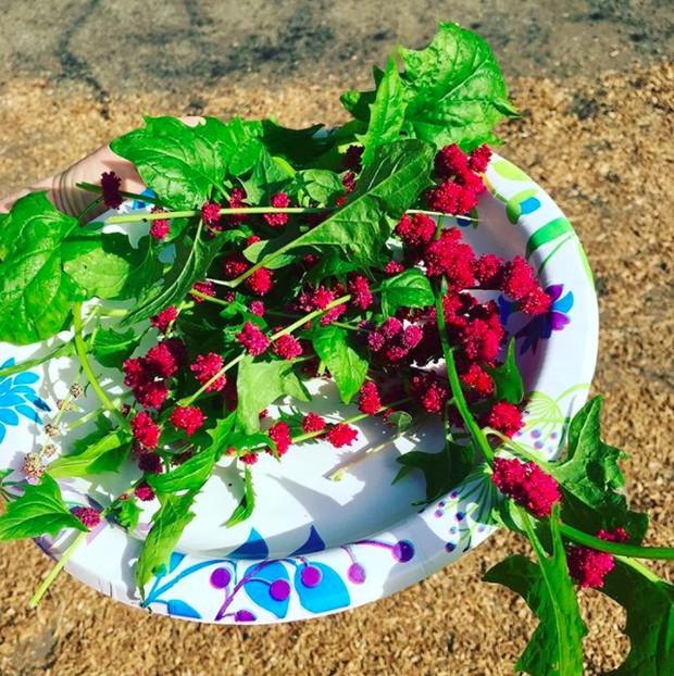 Những loại rau củ kỳ lạ nhất thế giới: Ngô 7 màu, xúp lơ trông như xương rồng - Ảnh 3.