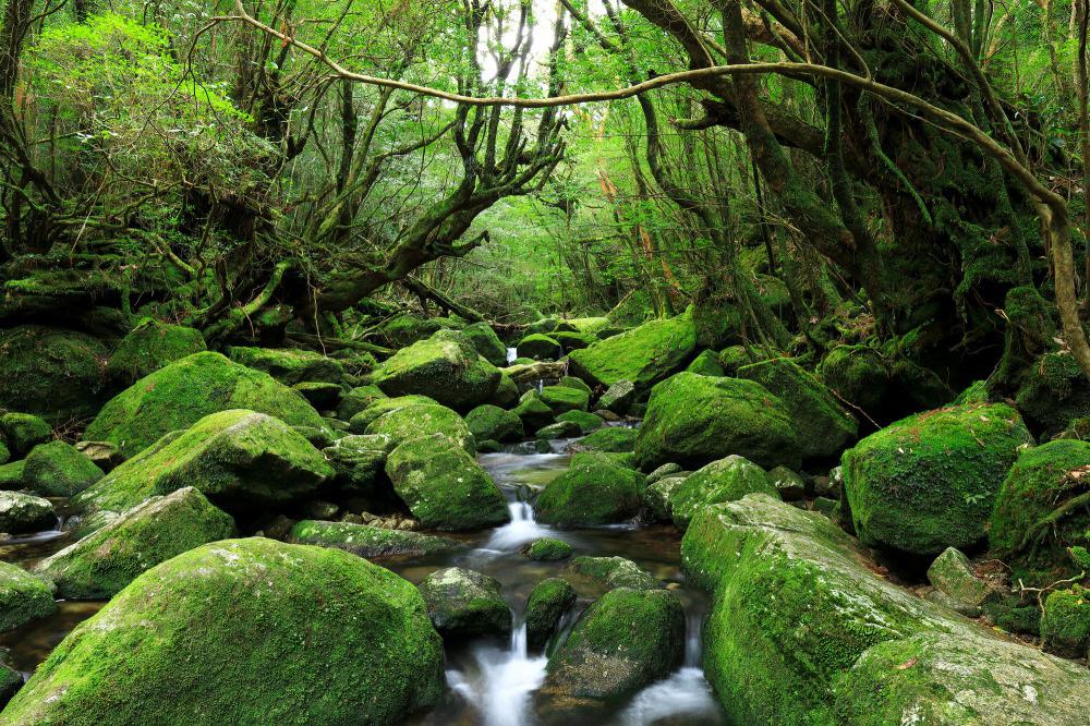 Lạc đến những địa điểm tuyệt đẹp trong Anime có thể tìm thấy ngoài đời thực - Ảnh 11.