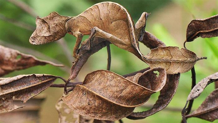12 loài vật có khả năng ngụy trang siêu đẳng, nhìn căng mắt vẫn ngỡ chúng tàng hình - Ảnh 5.