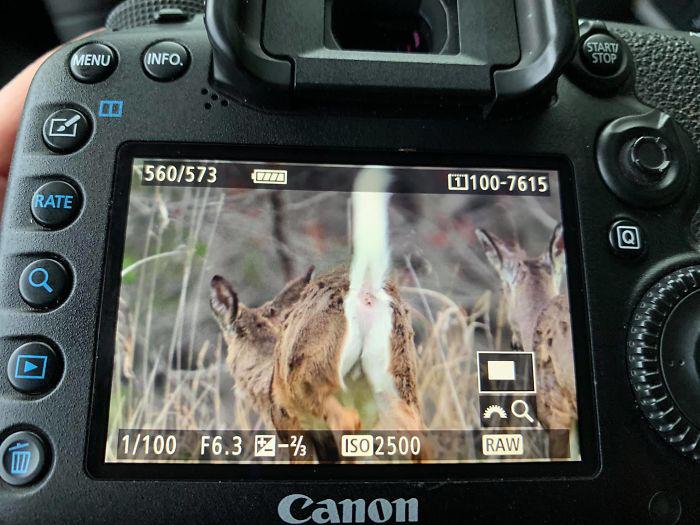 Những bức ảnh chụp thiên nhiên thảm họa tới mức chủ nhân của chúng chỉ muốn bỏ nghề - Ảnh 5.