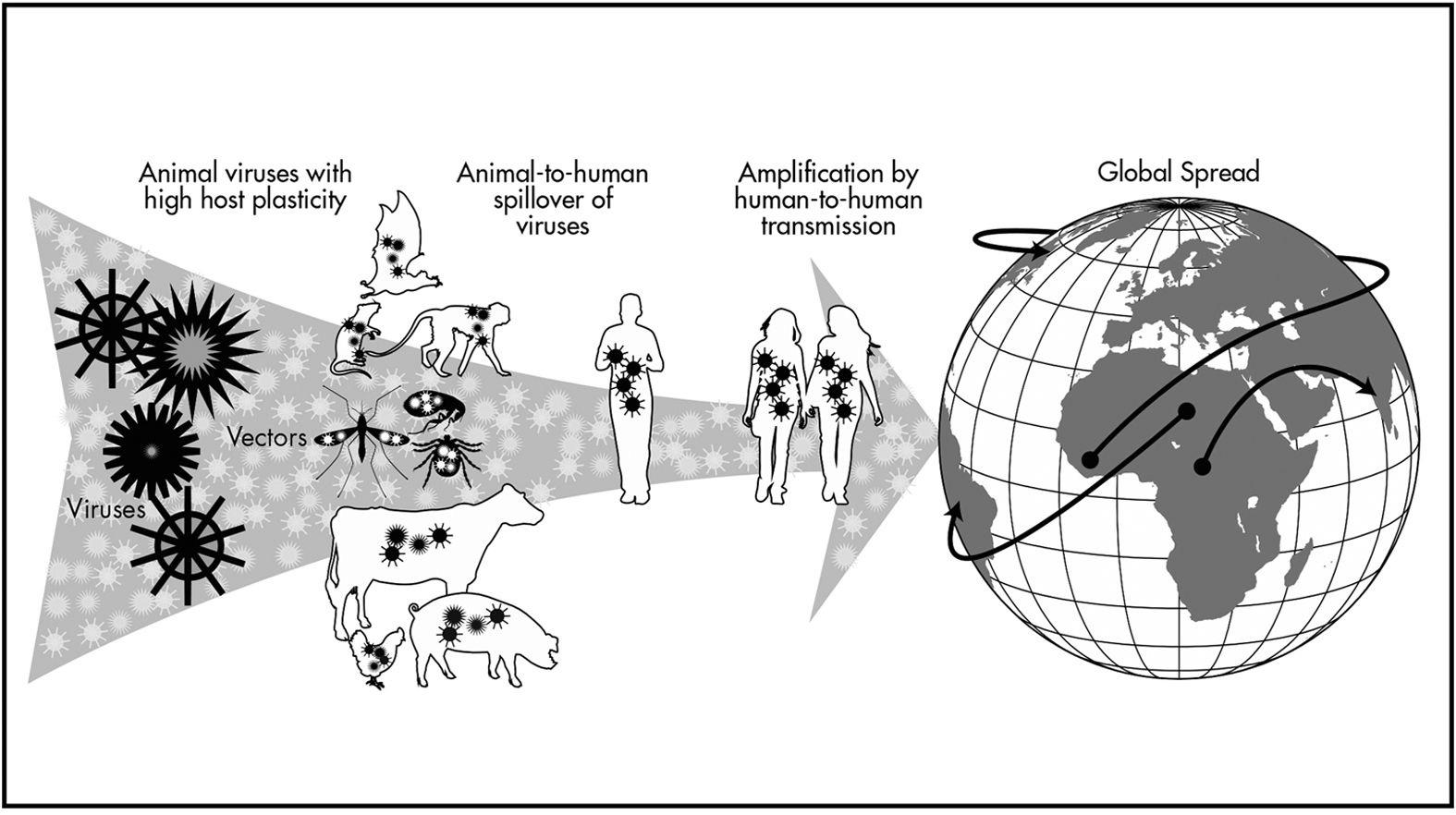 Để ngăn chặn các đại dịch trong tương lai, chúng ta cần coi sức khỏe của con người và cả hệ sinh thái là một - Ảnh 2.
