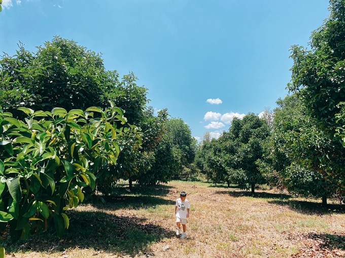NTK Đỗ Mạnh Cường hé lộ khu vườn ngập trái cây - Ảnh 4.
