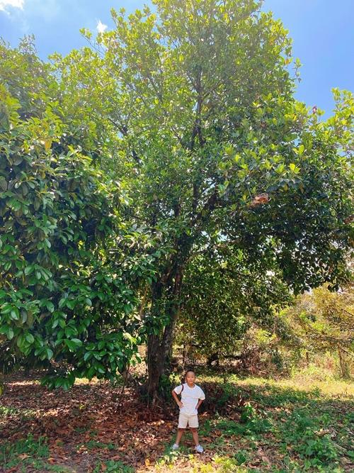 NTK Đỗ Mạnh Cường hé lộ khu vườn ngập trái cây - Ảnh 6.