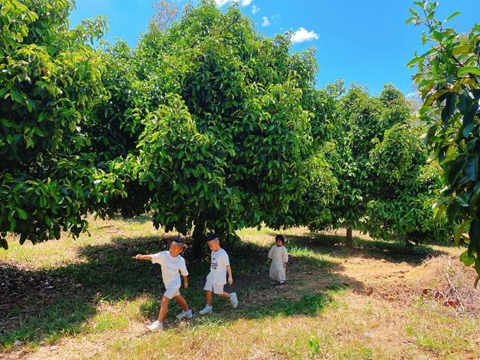 NTK Đỗ Mạnh Cường hé lộ khu vườn ngập trái cây - Ảnh 2.
