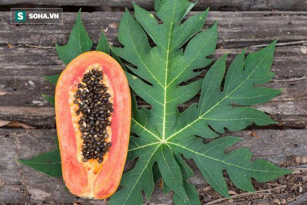 22 lợi ích sức khỏe đáng kinh ngạc của lá đu đủ - Ảnh 1.