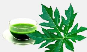 22 lợi ích sức khỏe đáng kinh ngạc của lá đu đủ - Ảnh 4.