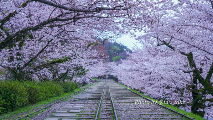 Sự thật buồn về đường ray tình yêu nổi tiếng Nhật Bản: Tưởng chung đường nhưng lại chia đôi ngả - Ảnh 1.