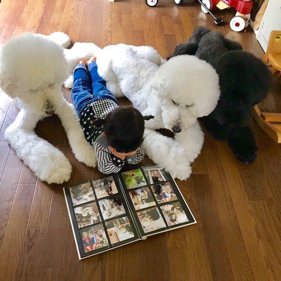Bà ngoại bỗng nổi như cồn khi khoe bộ ảnh các cháu chơi cùng 3 chú cún cưng cực kỳ dễ thương - Ảnh 5.