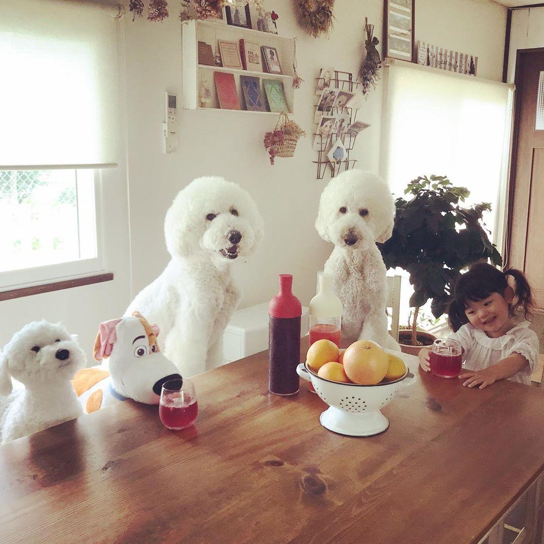 Bà ngoại bỗng nổi như cồn khi khoe bộ ảnh các cháu chơi cùng 3 chú cún cưng cực kỳ dễ thương - Ảnh 4.