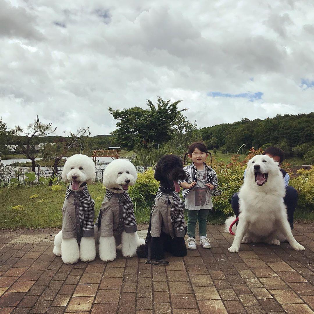 Bà ngoại bỗng nổi như cồn khi khoe bộ ảnh các cháu chơi cùng 3 chú cún cưng cực kỳ dễ thương - Ảnh 6.