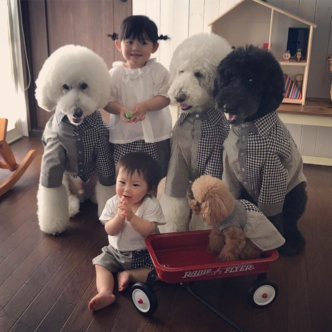 Bà ngoại bỗng nổi như cồn khi khoe bộ ảnh các cháu chơi cùng 3 chú cún cưng cực kỳ dễ thương - Ảnh 3.