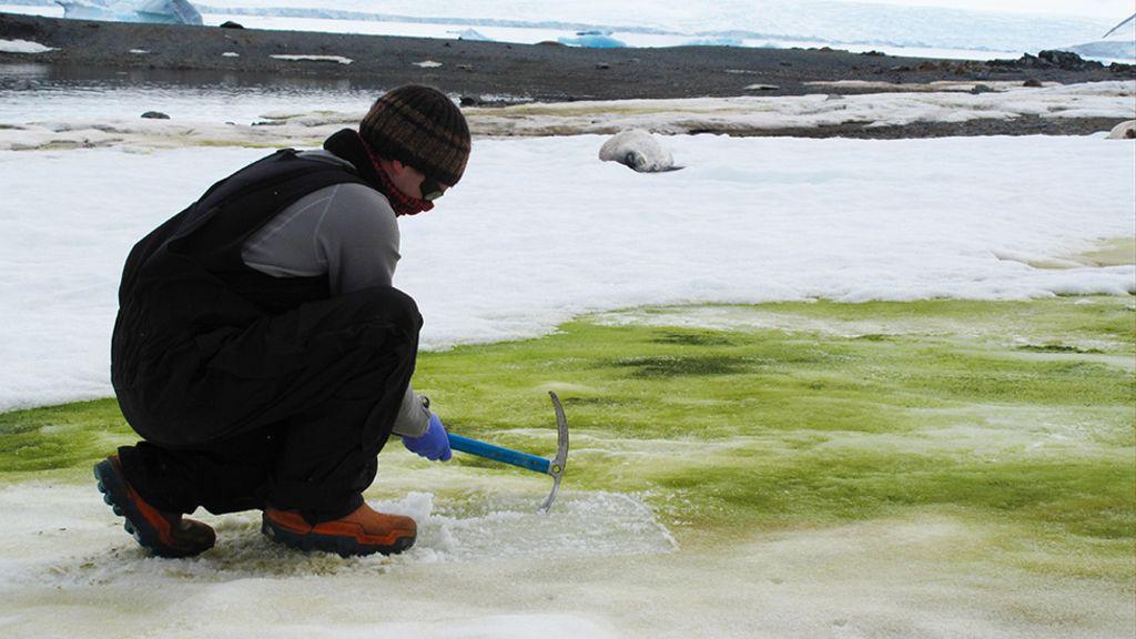 Tuyết Nam Cực bỗng nhiên chuyển sang màu xanh lá, có thể thấy rõ từ vũ trụ: Điều gì đang diễn ra ở đây vậy? - Ảnh 3.